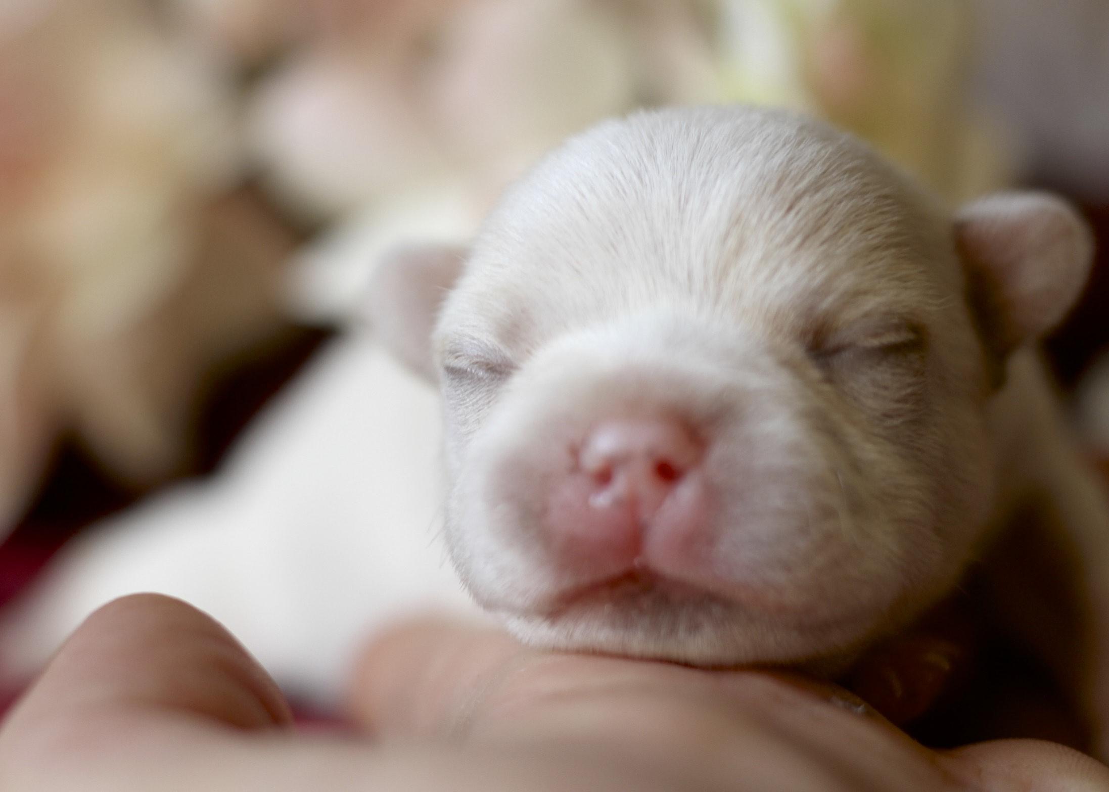 Pup 7 ~ Boy